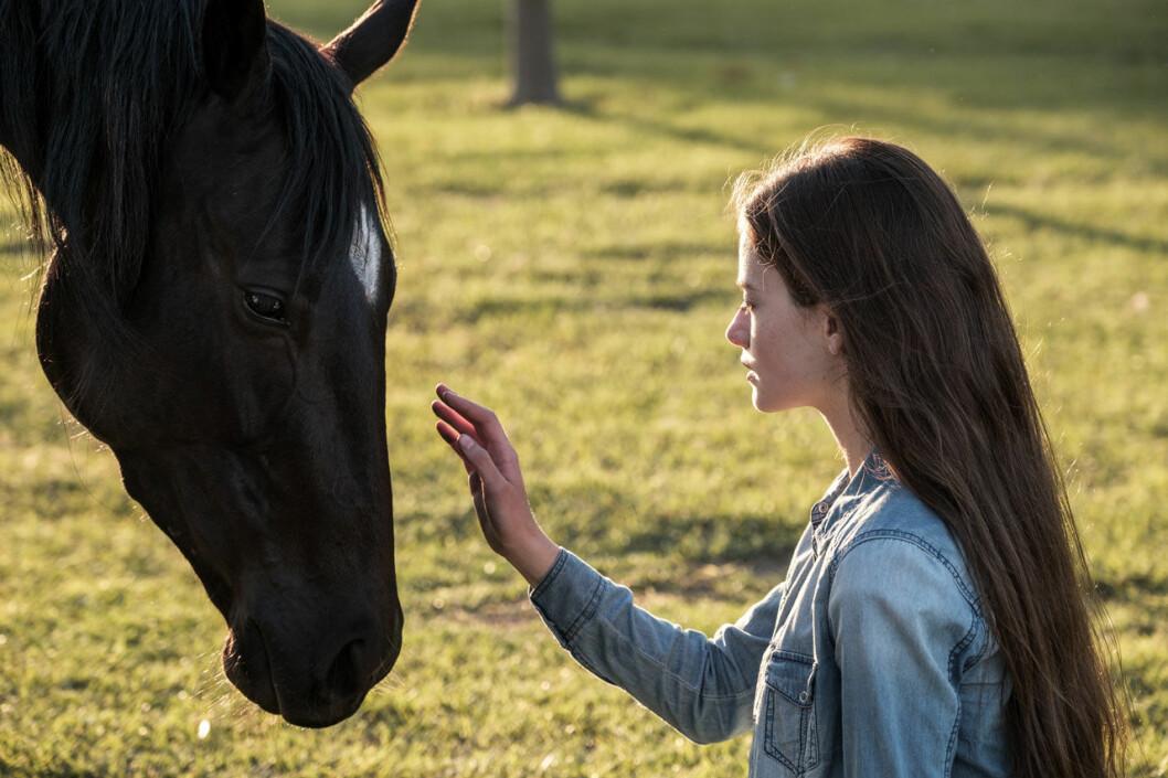 Bild från filmen Black Beauty