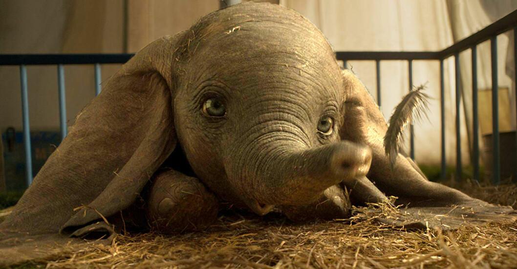 Elefanten Dumbo med sin fjäder.