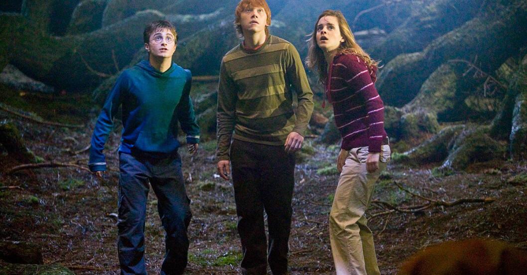 Harry-Potter-forbidden-forest