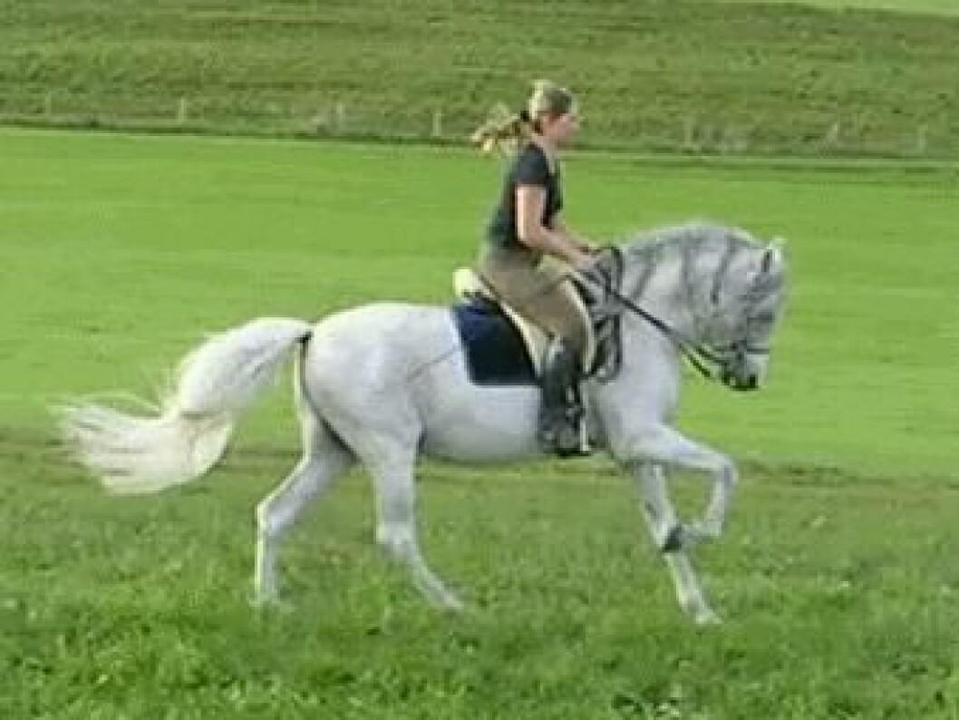 hästmänniska