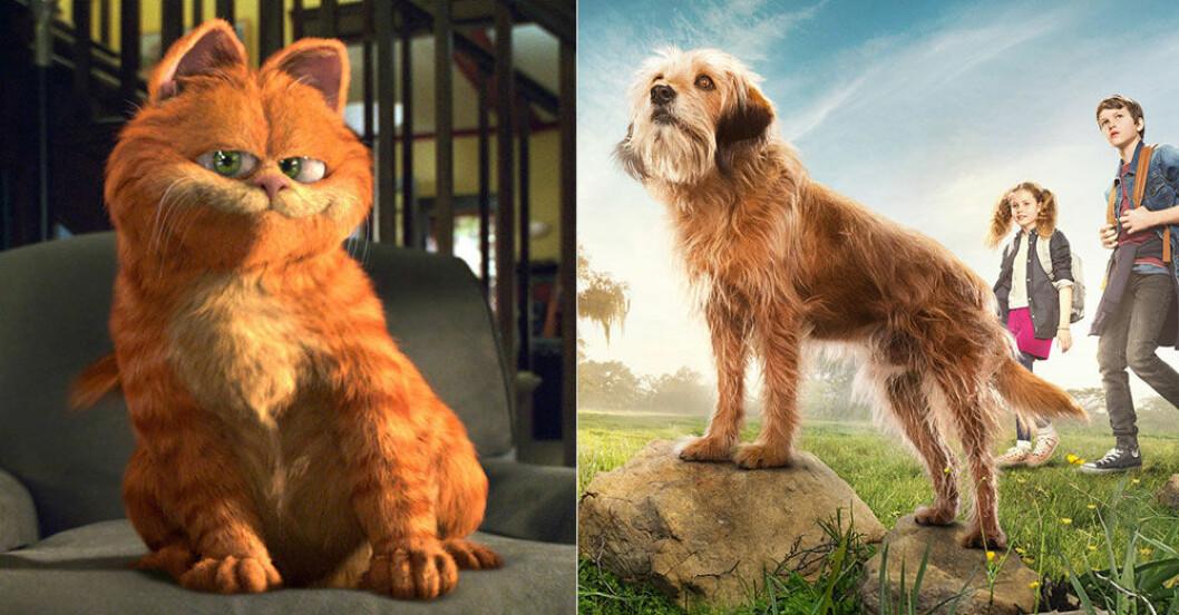 husdjur-filmer