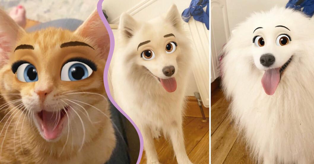 Katt och hundar med Disneyögon