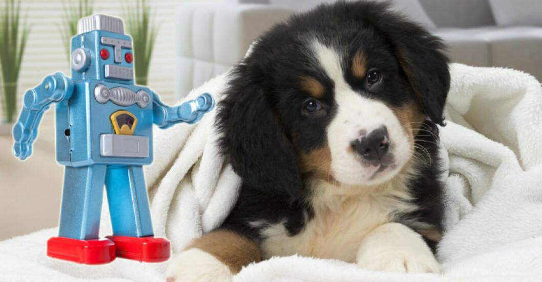 robot-hund-forsta