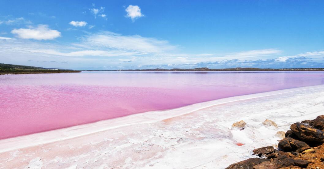 rosa-vatten