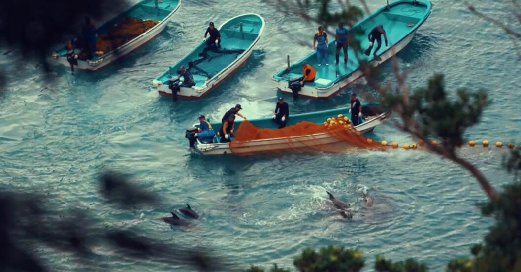 Seaspiracy: delfiner dödas i Taiji