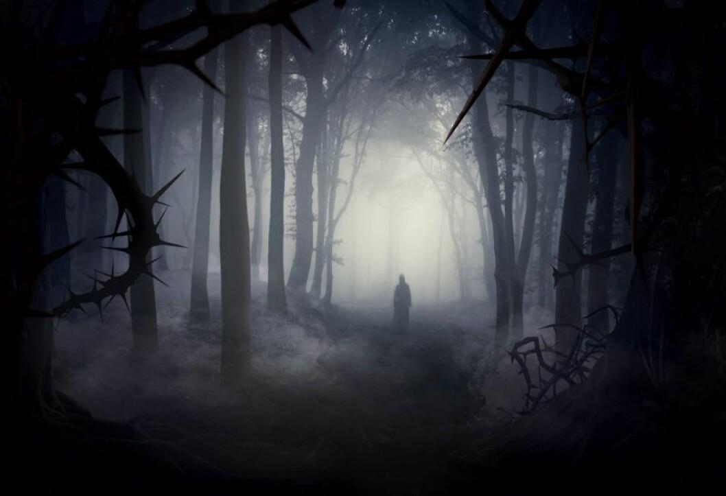 Bild från Skogen, årets Halloweennyhet 2019 på Liseberg